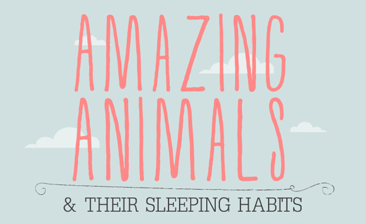 Surprising Facts About How Animals Sleep (Infographic)